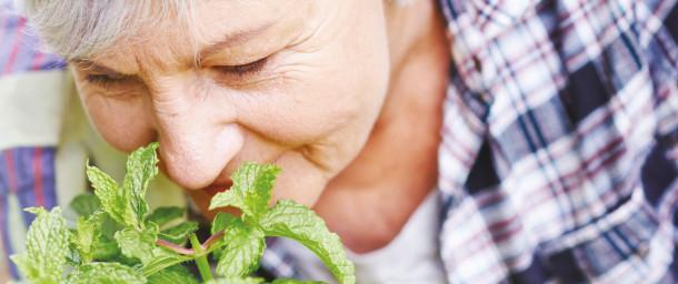 jardinage_les_villages_d_or